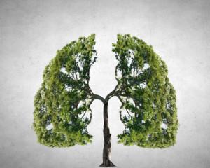 La Tuberculose est l'une des maladies infectieuses causant le plus de décès dans le monde.